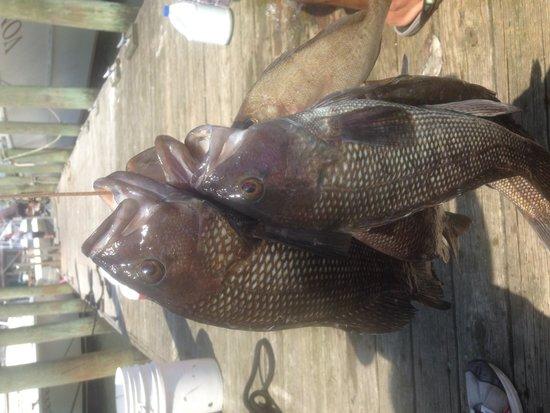 Great fishing skipper and crew vonda kay deep sea for Deep sea fishing wilmington nc