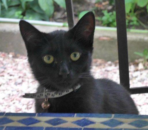 Le Chai de Marguerite: Nelson the kitten