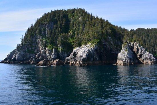 Kenai Fjords Tours : Amazing scenery!