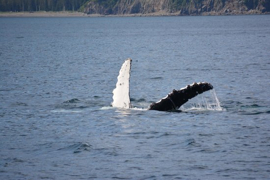 Kenai Fjords Tours : Humpback whale sighting.