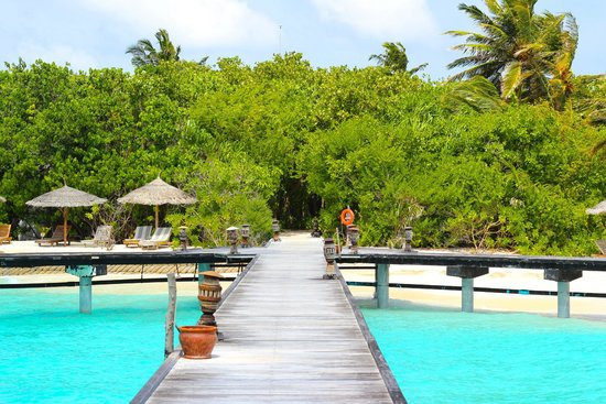 Reethi Beach Resort: Foilage