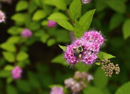Pleasant Bay Village : Flowers