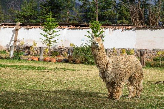 Sonesta Posadas del Inca Yucay : hola!