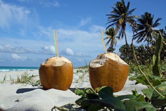 Casa Marta Margarita: The coco dream on the beach :))
