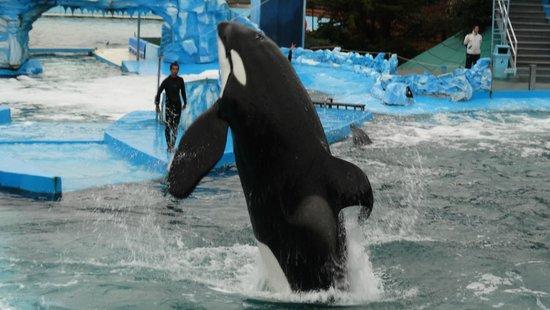 Mundo Marino: Espectáculo de delfines