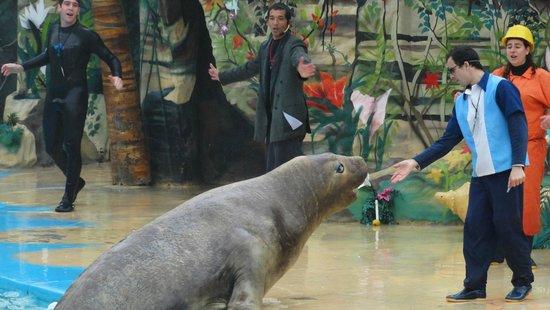 Mundo Marino: Show lobos2