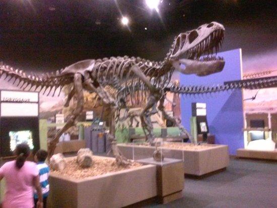 George S. Eccles Dinosaur Park: Inside the Mueseum