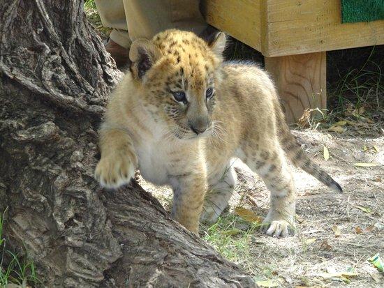 The Garold Wayne Interactive Zoological Park: baby