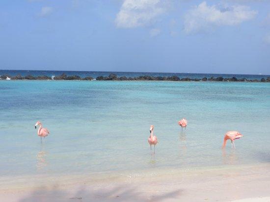 Renaissance Aruba Resort & Casino: Playa Privada