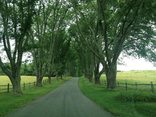 James Monroe's Highland: Ash Lawn-Highland Driveway