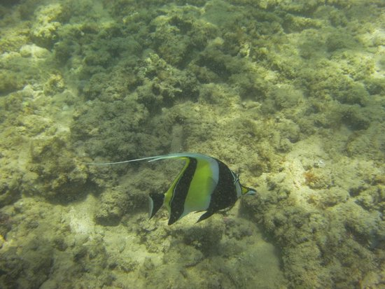 Poipu Sands Condominuims - Poipu Kai by TPC: Snorkeling at Poipu Beach