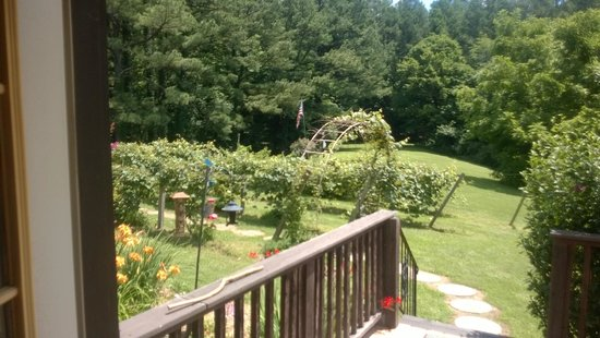 Shawnee Hill Bed and Breakfast : Vineyard