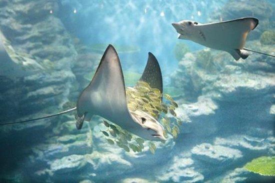 SEA LIFE Busan Aquarium: аквариум