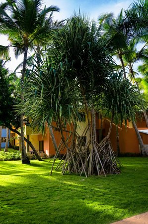 Iberostar Bavaro Suites : Grounds