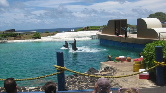Sea Life Park Hawaii : dolphin show #2