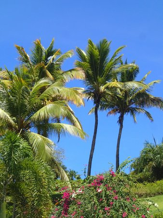 BodyHoliday Saint Lucia : View from pool area