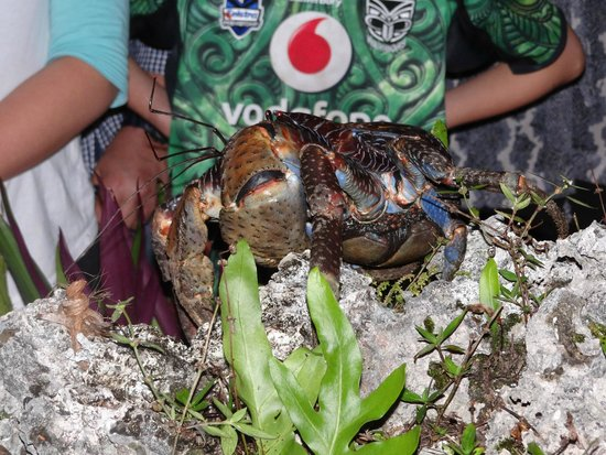 Niue Tours: Uga Crab