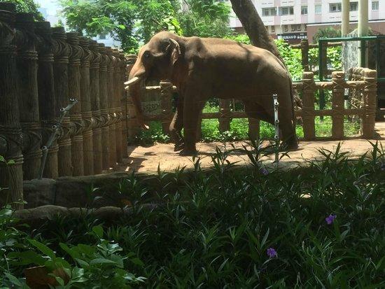 Zoo and Botanical Gardens: bored elephant