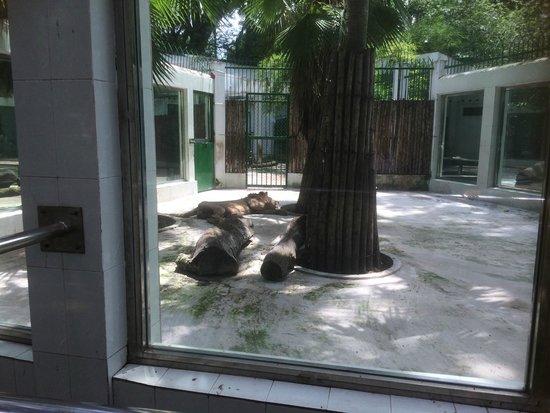 Zoo and Botanical Gardens: Sad lions