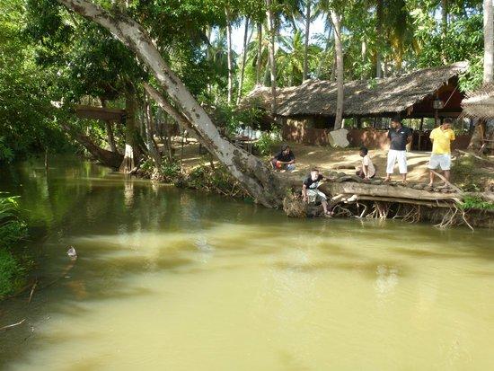 Rastarant Sigiriya: Sometimes elephants come for a bath.