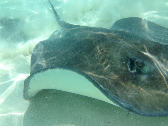 Captain Marvin: Sting rays!