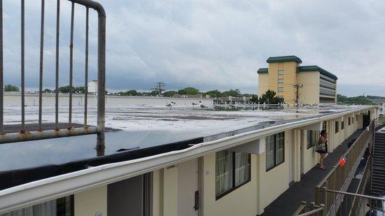 Best Western Plus Virginia Beach: The flat metal roof