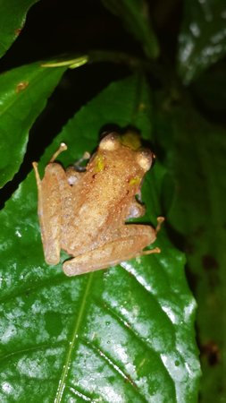 Drake Bay, Costa Rica: Gringo Curt and Tico Esteban- Day Tours - Eco Night Hike