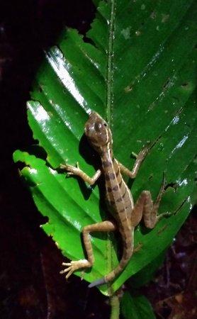 Drake Bay, Costa Rica: Gringo Curt and Tico Esteban- Day Tours - Eco Night Hike