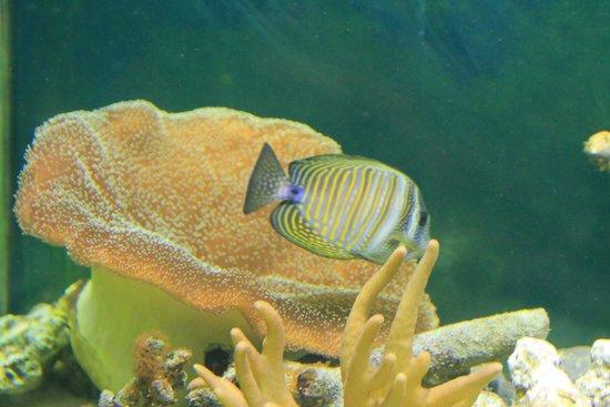 Deep Sea World: beautiful life