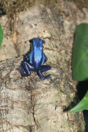 Deep Sea World: blue frog