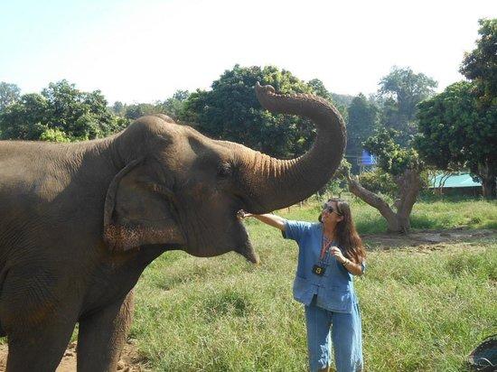 Baanchang Elephant Park - Private Day Tours: Feeding the elephants bananas