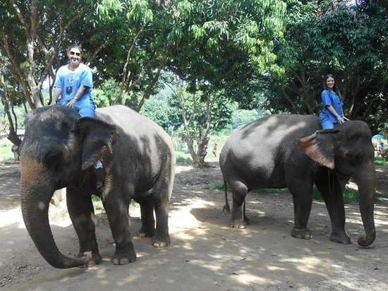 Baanchang Elephant Park - Private Day Tours: Learning to give the elephants commands