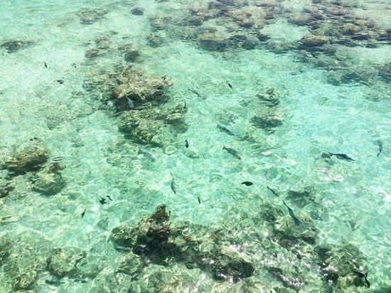 Reethi Beach Resort: All the fish seem to love the Moodhu bar too...