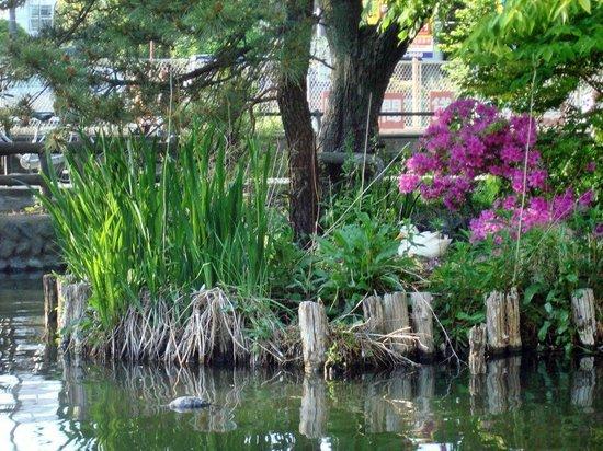 Shakujii Park: 14