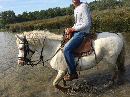 L'un des super chevaux du Mas de Calabrun