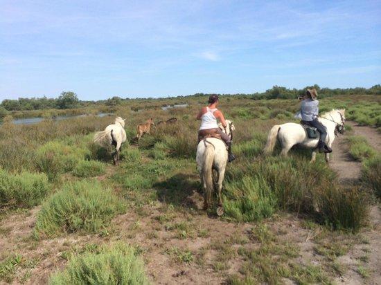 Mas de Calabrun : Journée découverte de la Camargue à cheval