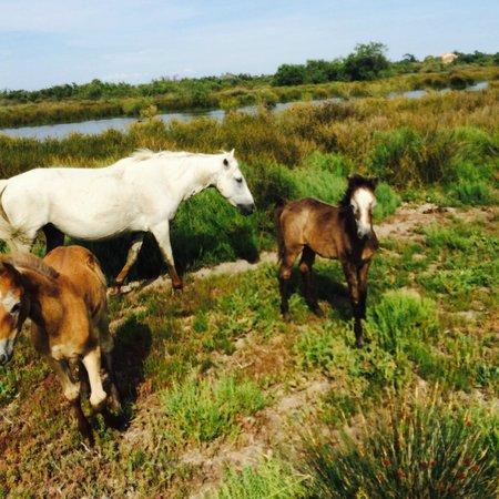 Les derniers nés de l'élevage du Mas de Calabrun