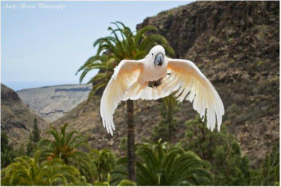 Palmitos Park: Birds show