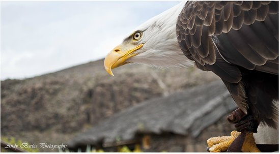 Palmitos Park: Birds of Pray