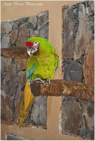Palmitos Park: Parrot Show