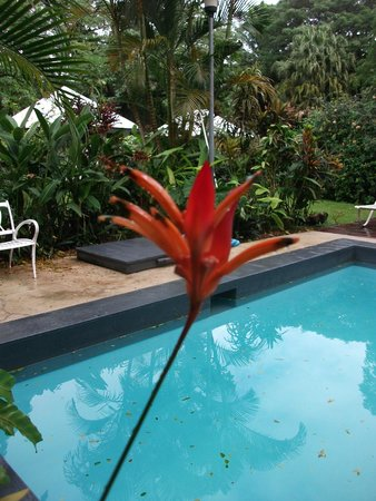 Coral Quays Fish & Dive Resort: beautiful gardens surround the pool