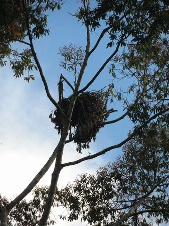 Semenggoh Nature Reserve: An abandoned orang utan's nest..