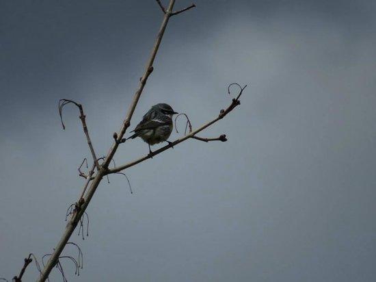 Robert W. Monk Public Gardens: Great Bird Watching