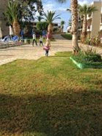 Dessole Malia Beach Hotel : garden pool  view