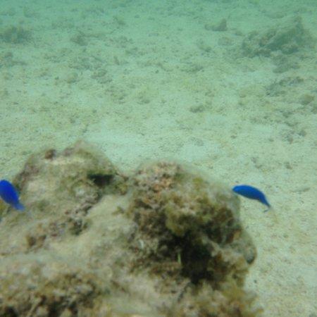 Club Med Kabira Ishigaki : Snorkeling