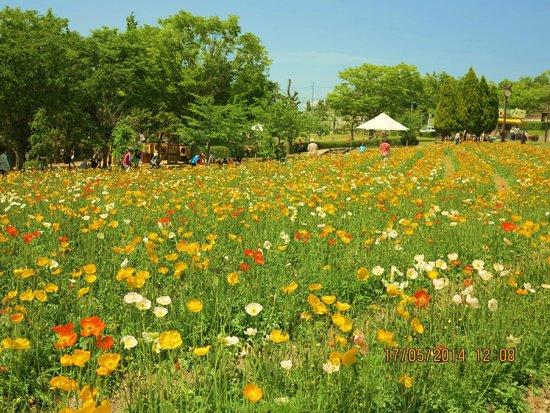 Tondabayashi Savor Farm : Savor Farm