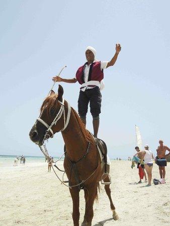 Seabel Rym Beach : Cavalier du spectacle fantaisie