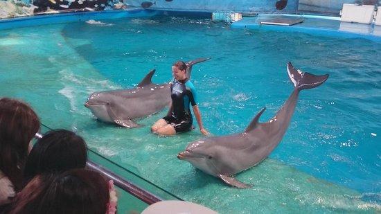 Dolphin Show Photo De Barcelona Zoo Barcelone Tripadvisor