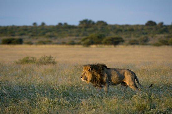 Safari 365 - Day Adventures: African Safari Tours