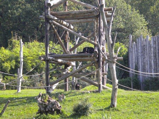 Parco Natura Viva: Scimmie